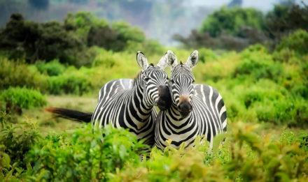 travel kenya