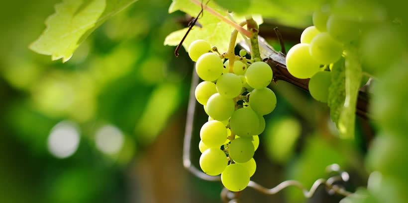 grapes Australia